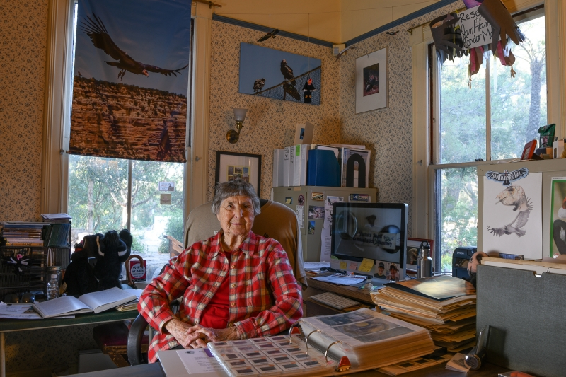 Jan Hamber in her office, surrounded by condor-related images and documents