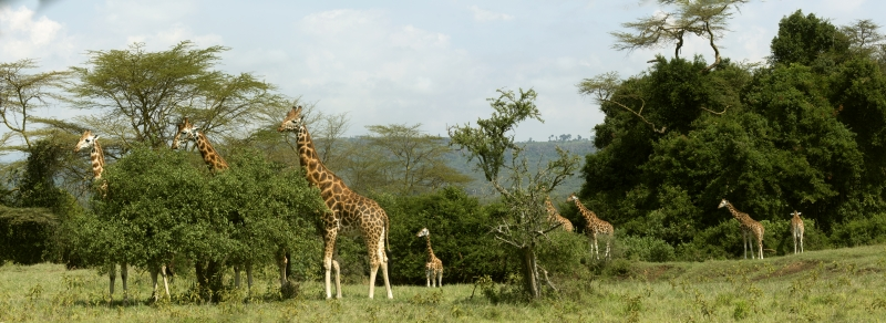 Giraffe - #1 Virtual Field Trips for Kids