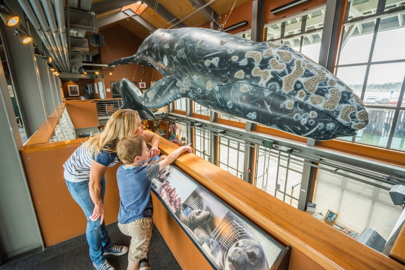 A woman and a young boy looking at a giant replica of a Gray Whale on the bright and airy upper deck at the Sea Center