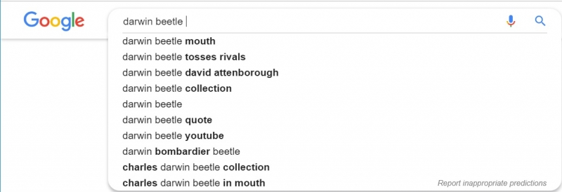 google search suggests Darwin beetle mouth