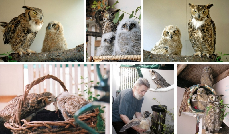 Max with adopted owlets