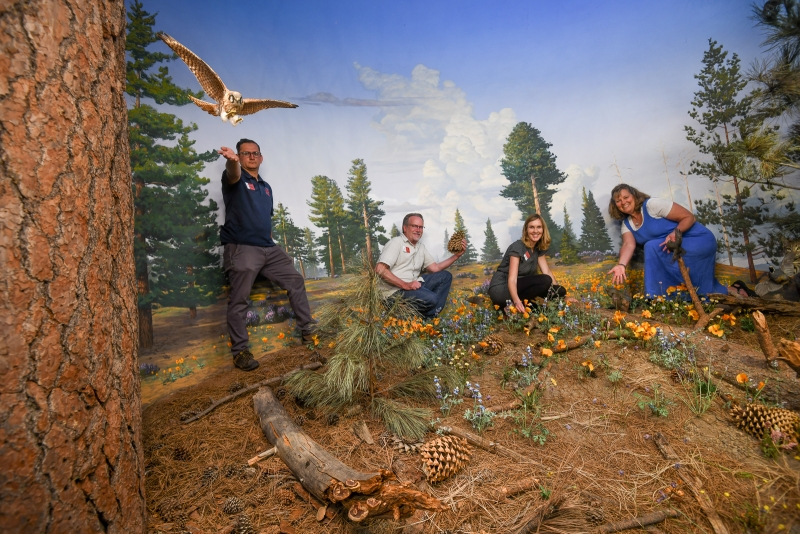 Francisco Lopez Frank Hein Florine de With Debra Darlington exhibits staff in mountain meadow diorama