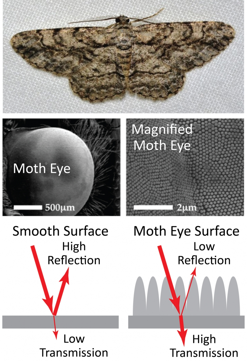 bumpy structures in the moth eye prevent reflection