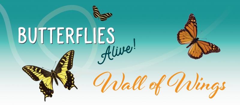 Butterflies Alive Exhibit at the Museum