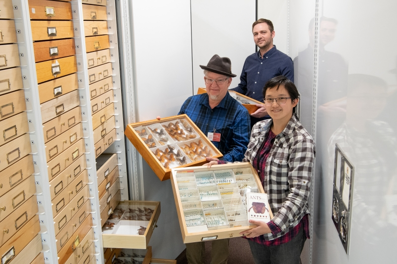 Clockwise from top: Gimmel, Research Associate Elaine Tan, Volunteer Malcolm Tuffnell in the Entomology Collections
