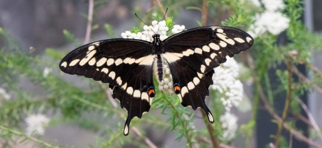 Members-Only Day: Butterflies Alive!