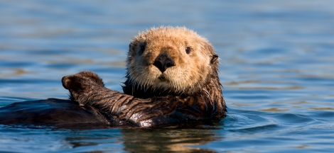 Things You Otter Know Thursday