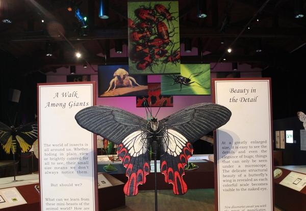 Bugs   Outside the Box   Santa Barbara Museum of Natural History
